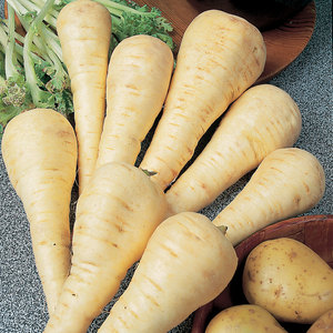 Suttons Seed Parsnip Gladiator F1