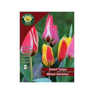 Mixed Dwarf Tulips 10 Bulbs