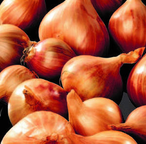 Red Sun Shallots 500g