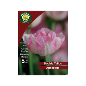Angelique Double Tulip 100 Bulbs