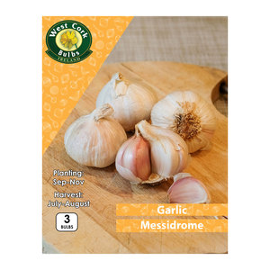 Garlic Messidrome 3 Bulbs White Garlic