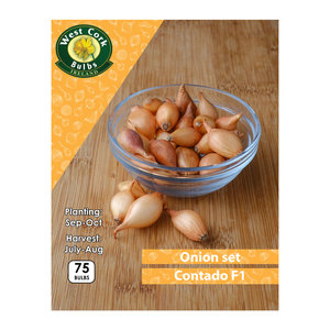 Onion Sets Contado F1 75 Bulbs